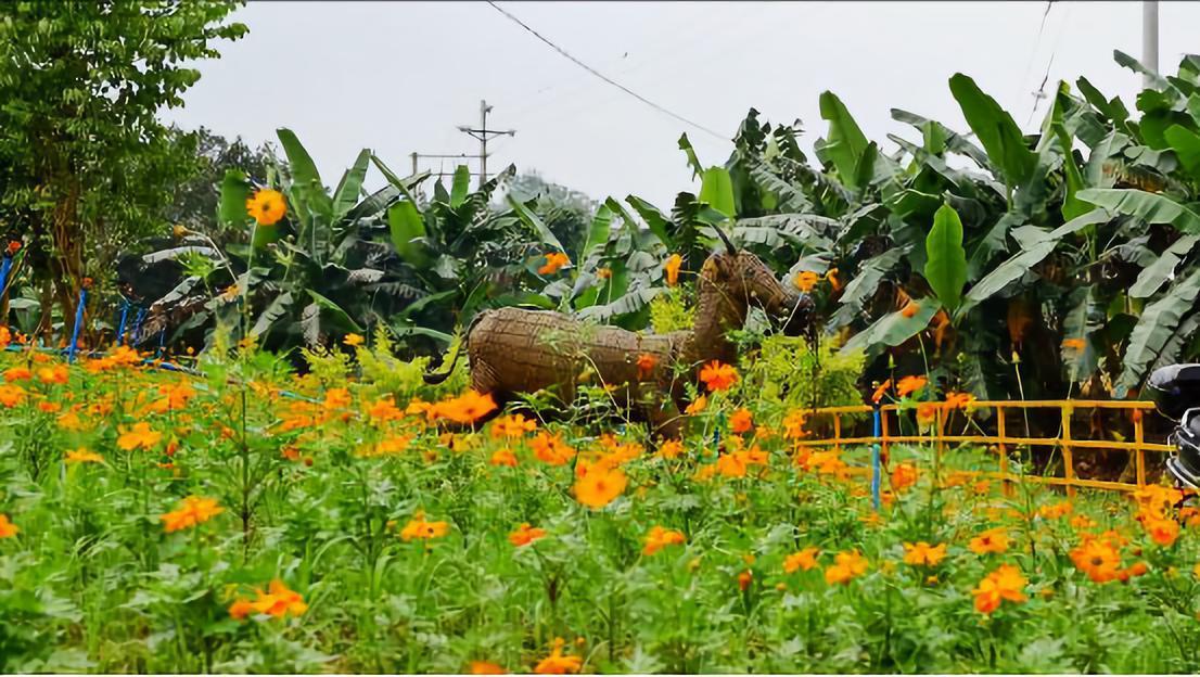 ▲屹立于田间的稻草作品为游客带来别样的童话风情。