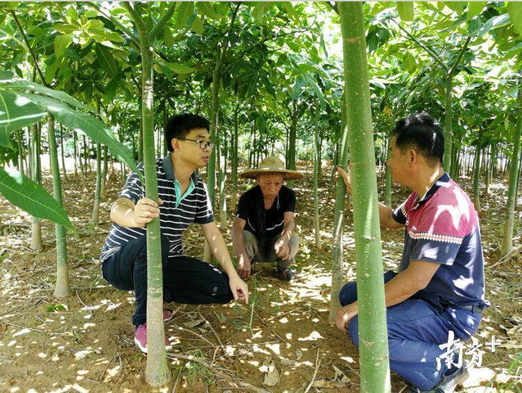 村驻村第一书记指导贫困户种植发财树,大力发展产业促脱贫。